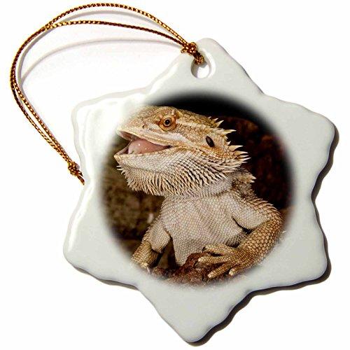 David Northcott Native to Australia Lizards 3 inch Snowflake Porcelain Ornament NA02 DNO0680 Bearded Dragon lizard orn/_84029/_1 3dRose Danita Delimont