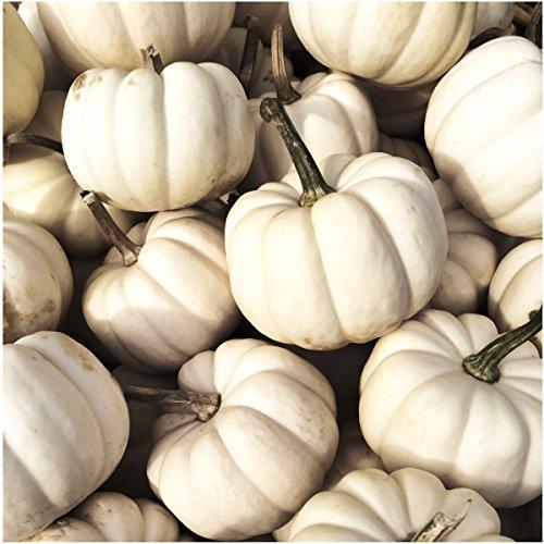 Seed Needs, Baby Boo Pumpkin (Cucurbita Pepo) Twin Pack of 50 Seeds Each Non-GMO