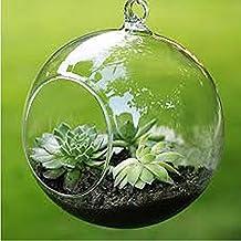 Merssavo Mini Clear Ball Shape Hanging Glass Vase Flower Plant Micro Landscape Bottle