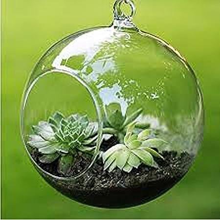 Merssavo Mini Clear Ball Shape Hanging Glass Vase Flower Plant Micro
