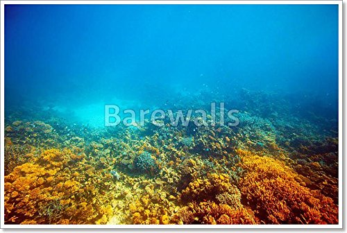 Coral Reef In Red Sea Paper Print Wall Art Paper Print Wall Art (28in. x 42in.) by barewalls
