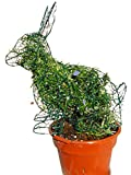 Sitting Bunny 14 Inches High w/ Rosemary Topiary Frame, Handmade Animal Decoration