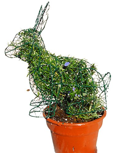 Sitting Bunny 14 Inches High w/ Rosemary Topiary Frame, Handmade Animal Decoration by S.K 703 Topiary Inc.