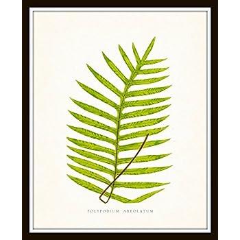 Vintage Ferns Botanical Print Set No.1 Set of 6 Giclee Fine Art Prints - Unframed