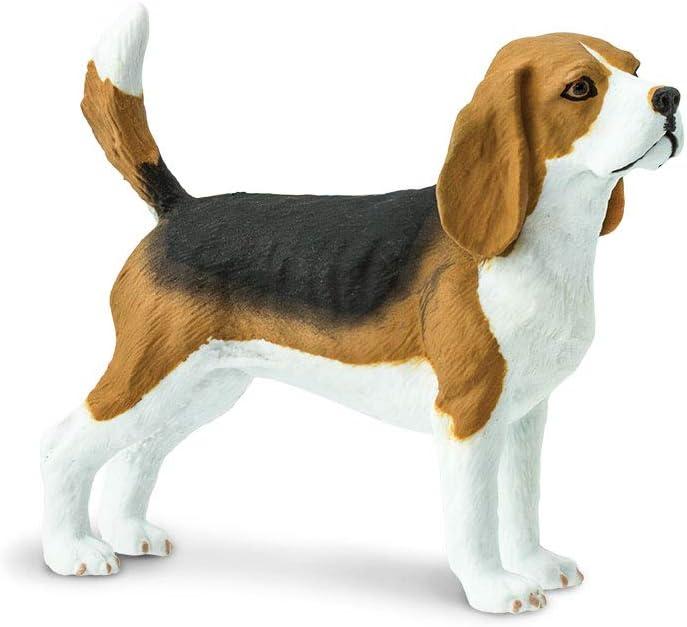Safari 254929Perro Beagle