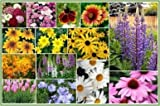 David's Garden Seeds Wildflower All Perennial Seed Mix DGS112CDE (Multi) 1000 Open Pollinated Seeds