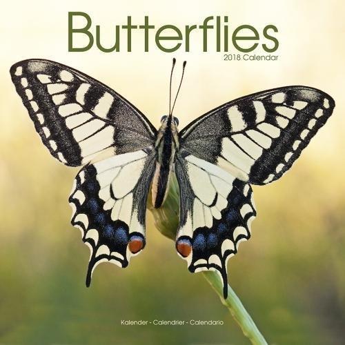 Butterfly Calendar - Calendars 2017 - 2018 Wall Calendars - Animal Calendar - Butterflies 16 Month Wall Calendar by Avonside
