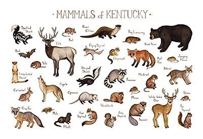 Kentucky Mammals Field Guide Art Print