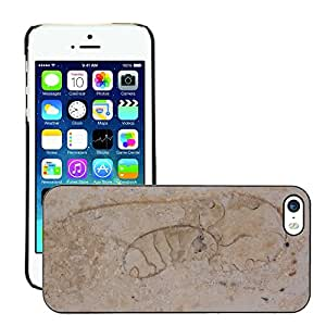 Print Motif Coque de protection Case Cover // M00155767 Petrification Fossil Fossil bestia // Apple iPhone 5 5S 5G