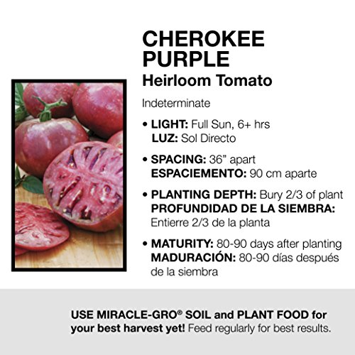 Bonnie Plants Cherokee Purple Heirloom Tomato (4 Pack) Live Plants by Bonnie Plants (Image #3)