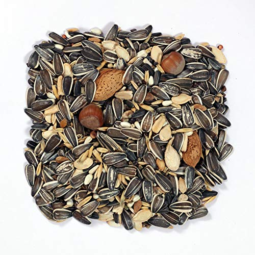 PAXI DAYA Big Indian Parrot Food 15-18 Types of Seed Mix for African Gray, Macaw, Cockatoo, and Other Birds 450 Gram