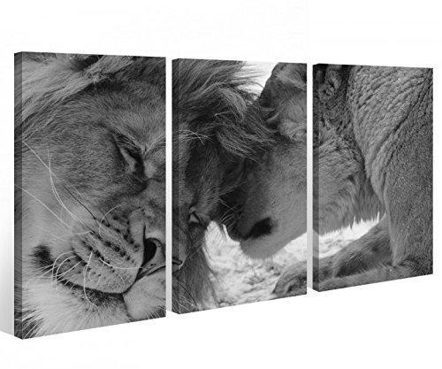 Leinwand 3 tlg. Afrika Löwe schwarz weiß Love Tier Liebe Bilder Wandbild 9A562 Holz-fertig gerahmt -direkt Hersteller, 3 tlg BxH 120x80cm (3Stk 40x 80cm)
