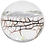 Limited Time Offer on EcoSphere Closed Aquatic Ecosystem, Small Sphere.