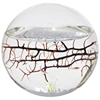 Ecospheres Product