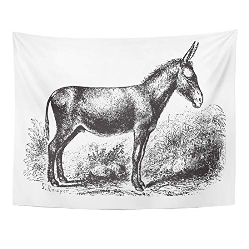 Emvency Tapestry 80 x 60 Inches Animal Donkey on Field Vintage Engraved Animaux Sauvages Et Domestiques 1892 Etching Forest Home Decor Tapestries Wall Hangings Art for Living Room Bedroom Dorm ()