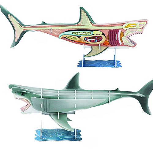 3d anatomy models - 1