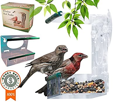 Window Birds Feeder - Two-Floor with Detachable Tray, Compartments & Drainage Holes, See-Through for Spring Wild Bird Watching