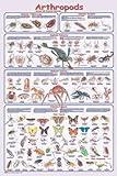 (24 x 36) Arthropods Poster