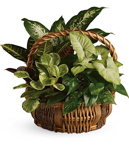 Chicago Flower Co. - Emerald Garden Basket - Fresh and Hand Delivered