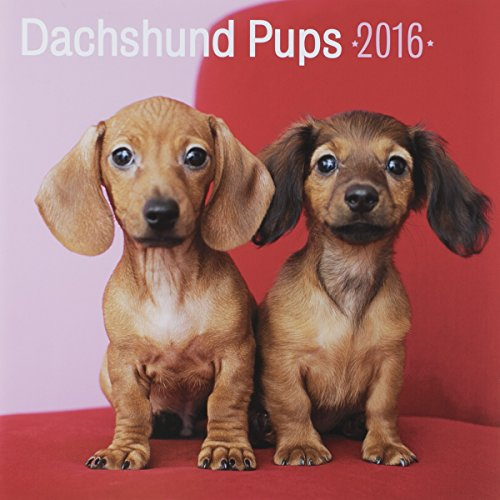 "DaySpring 12"" x 12"" 2016 12-Month Wall Calendar, Dachshund Pups (74323)"