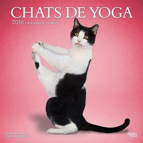 Yoga Cats - 2016 Calendar 12 x 12in: 9781465050748: Amazon ...