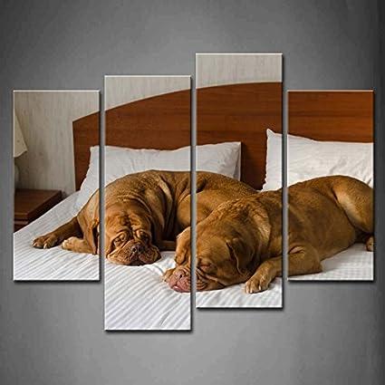4 Panel de pared Art Funny pareja perro en la cama pintura fotos impresión sobre lienzo