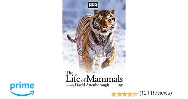 Amazon.com: The Life of Mammals: David Attenborough, Michael deGruy, Paul Atkins: Movies & TV