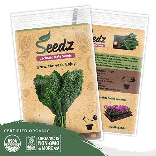 (Organic Kale Seeds (APPR. 550) Lacinato Kale - Heirloom Vegetable Seeds - Certified Organic, Non-GMO, Non Hybrid - USA )