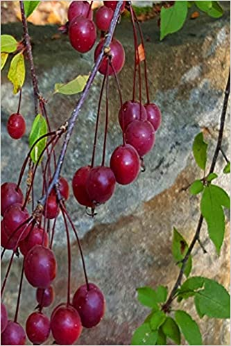 2019 Weekly Planner Autumn Tree Plump Red Berries 134 Pages