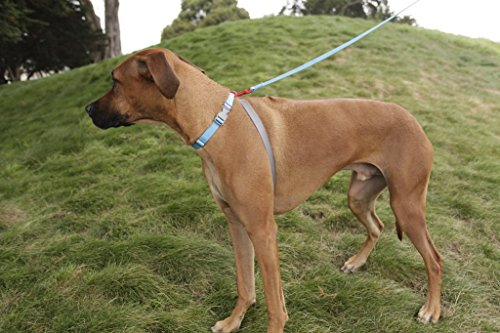 Reviews For Bodycollar No Pull Collar For Dogs
