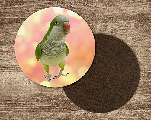 Quaker Parakeet - Quaker parakeet drink coasters. Set of 4