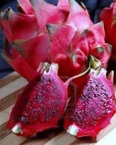Dragon fruit PURPLE FLESH pitaya exotic tropical cacti edible good eat plant 4''
