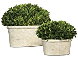 Oval Globe Topiary Pot Set | Preserved Boxwood Greenery European