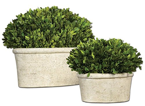 Oval Globe Topiary Pot Set | Preserved Boxwood Greenery European by Intelligent Design