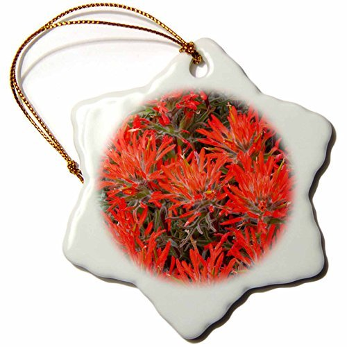 Ornaments to Paint Danita Delimont - Wildflower - Wyoming, Lincoln County, Desert Paintbrush close-up of flowers. -