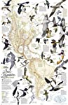 Bird Migration, Western Hemisphere [Laminated] (National Geographic Reference Map)