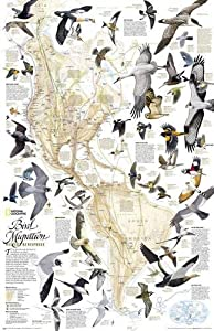 This National Geographic classic shows the mystery of bird migration and the incredible journeys that birds undertake in the Americas each year. 67 types of birds that migrate are shown on a map of the Americas that is overlaid with pathways that ...