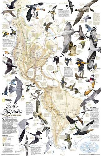 National Geographic: Bird Migration, Western Hemisphere Wall Map - Laminated (20.25 x 31.25 inches) (National Geographic Reference Map)
