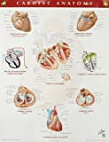 Cardiac Anatomy Chart 9781929007264
