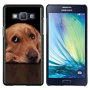 KLONGSHOP // Cubierta de piel con cierre a presión Shell trasero duro de goma Protección Caso - Labrador retriever de oro Guilty Ojos de perro - Samsung Galaxy A5 A5000 //