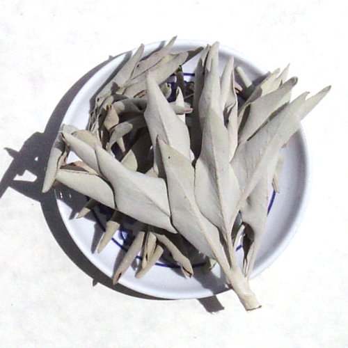 - White Sage Loose Incense Clusters - Sold as 1 pound package