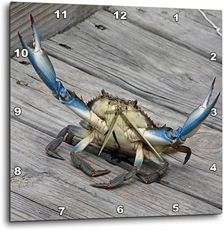 3dRose dpp_63150_3 Blue Crab-Marine, Creature, Animal, Animals, Wildlife, Ocean, Invertebrate, Crab, Seafood-Wall Clock, 15 by 15-Inch