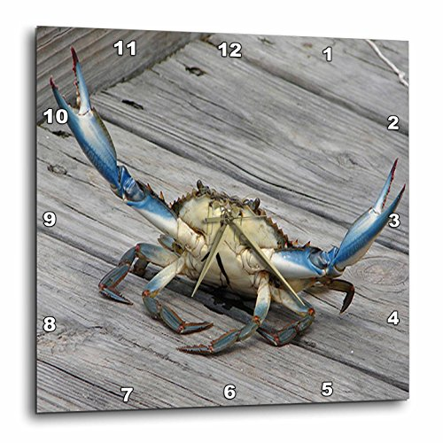 3dRose dpp_63150_2 Blue Crab-Marine, Creature, Animal, Animals, Wildlife, Ocean, Invertebrate, Crab, Seafood-Wall Clock, 13 by 13-Inch by 3dRose