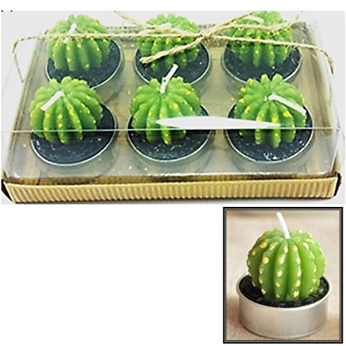 [Pack Of 6 Gymnocalycium Cutie Bougies] (6