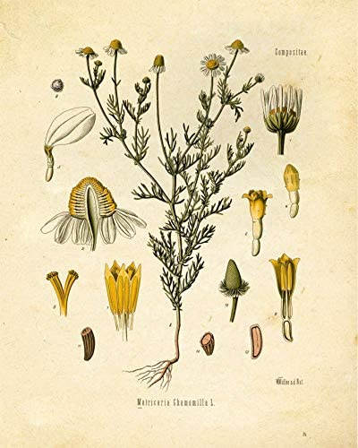 home, kitchen, wall art,  posters, prints 3 discount Botanical Prints Tea Herbalism Herbs Vintage Wall Art in USA