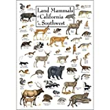 Earth Sky & Water Poster - Land Mammals of California & the Southwest