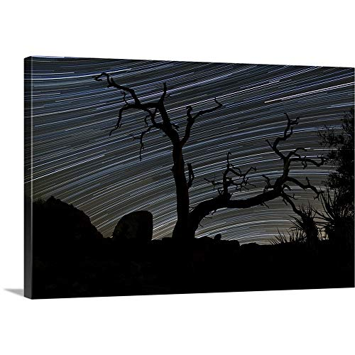 GREATBIGCANVAS Gallery-Wrapped Canvas Entitled A Dead Pinyon Pine Tree and Star Trails, Joshua Tree National Park, California by Dan Barr 18