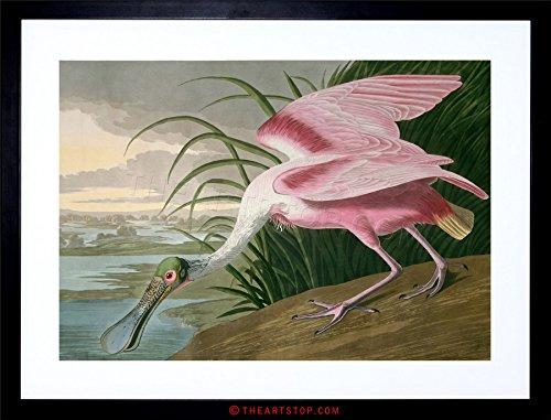 The Art Stop Painting Bird Audubon Roseate Spoonbill Framed Print ()