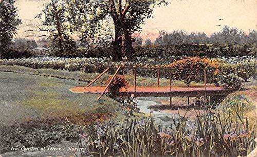 Advertising Post Card Iris Garden, Dreer