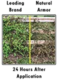 Natural Armor Weed and Grass Killer All-Natural